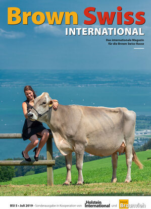 Brown Swiss INTERNATIONAL