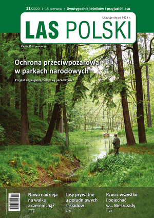 Las Polski